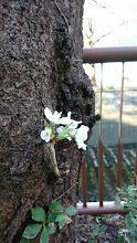 桜1002.JPG
